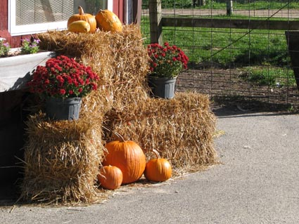 Starting Our Harvest Time Curriculum